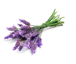 Lavender (true) Essential Oil