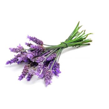 Lavender (true) Essential Oil